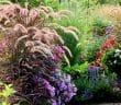 Comment aménager un jardin de graminées et autres plantes vivaces