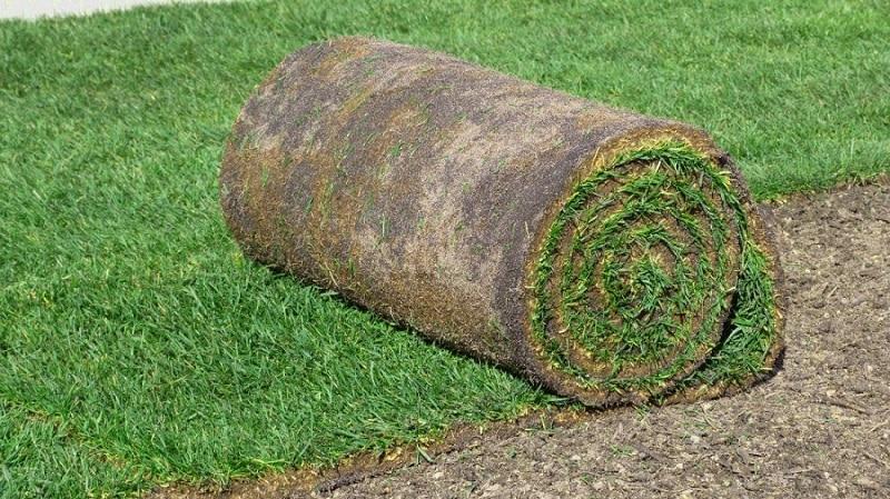 Comment tasser la pelouse