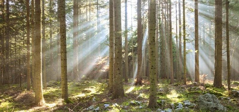 Investir en groupement forestier GFI et GFF