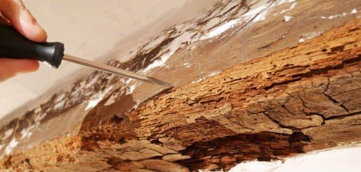 Le diagnostic termites : pourquoi le faire avant la vente d'une maison ?